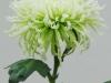 Anastasia Lime Disbud Chrysanthemum