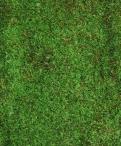 Moss Greenery