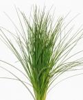 Pineapple Grass Greenery
