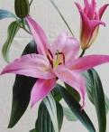 Justina Oriental Lilium