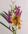 wedding-flowers-floraco-orchid-pack.jpg