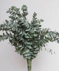 Wildflower gum cinneria