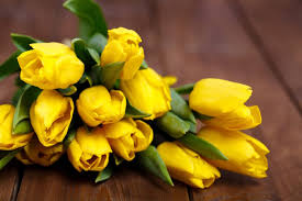 This image has an empty alt attribute; its file name is Yellow-tulip.jpg